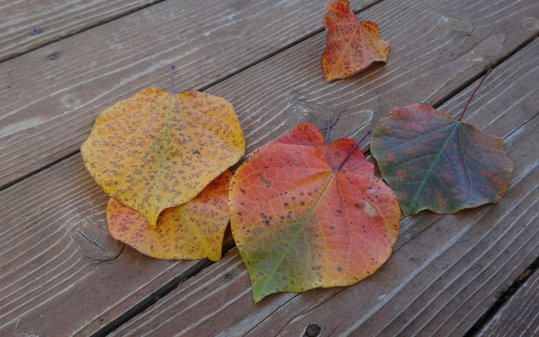 5 Autumn Cleaning Tips for Your Workplace